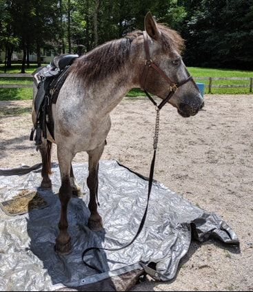 Available Horses - GAIT, Inc